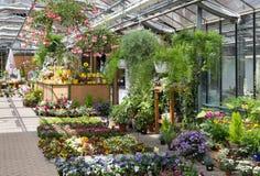 Центр сада продавая заводы в парнике Стоковое Фото