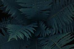 Центр темного ого-зелен дерева папоротника в родном кусте, текстура естественной предпосылки Стоковое Изображение RF