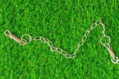 Цепные собаки переводчика на eco предпосылки текстуры зеленой травы жульничают Стоковая Фотография
