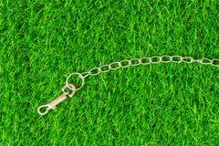 Цепные собаки переводчика на eco предпосылки текстуры зеленой травы жульничают Стоковое Изображение