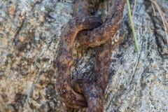 Цепь ржавчины Стоковая Фотография RF