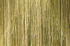 Цепь световых маяков золота Стоковая Фотография RF