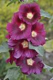 Цепь цветков на одиночном стержне стоковое изображение
