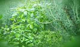 Целебные травы и специи Стоковая Фотография