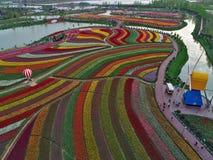 Цзянсу yancheng: воздушное фотографирование 30 миллионов тюльпанов в Нидерландах отравляет стоковые изображения