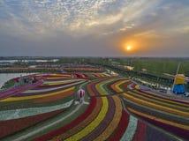 Цзянсу yancheng: воздушное фотографирование 30 миллионов тюльпанов в Нидерландах отравляет стоковое фото rf