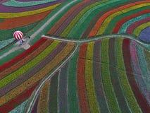 Цзянсу yancheng: воздушное фотографирование 30 миллионов тюльпанов в Нидерландах отравляет стоковая фотография rf