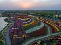 Цзянсу yancheng: воздушное фотографирование 30 миллионов тюльпанов в Нидерландах отравляет стоковые фотографии rf