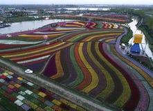 Цзянсу yancheng: воздушное фотографирование 30 миллионов тюльпанов в Нидерландах отравляет стоковая фотография