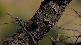 Цикада на дереве акции видеоматериалы