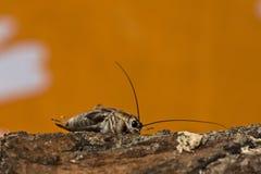 цикада стоковые фотографии rf