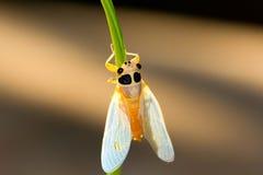 цикада Стоковые Изображения RF