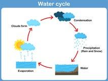 Цикл вектора воды для детей иллюстрация вектора