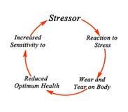 Цикл стресса Стоковые Фото