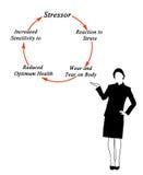 Цикл стресса Стоковая Фотография
