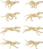 Цикл Dogrun Стоковое фото RF
