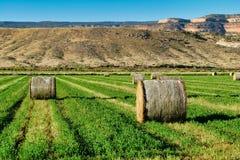 Цилиндрические связки сена в августе стоковое фото