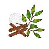 Циннамон нарисованный рукой Стоковые Изображения RF