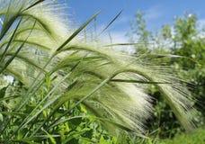циновка травы Стоковая Фотография