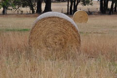 Циркуляр связок сена круглый Стоковая Фотография
