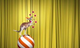 Цирк в городе Стоковые Фото