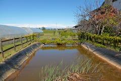 Цистерна с водой Стоковая Фотография