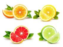 Цитрусовые фрукты делят на сегменты 4 реалистических значка иллюстрация вектора