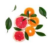 Цитрусовые фрукты изолированные на белой предпосылке Изолированные цитрусовые фрукты Части розового грейпфрута и апельсина изолир стоковое фото