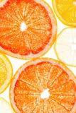 Цитрусовые фрукты как предпосылка Стоковое фото RF