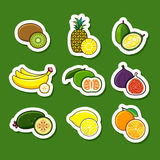 цитрусовые фрукты установили тропическим Стоковые Изображения