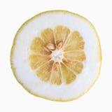 Цитрусовые фрукты цитрона Стоковые Изображения