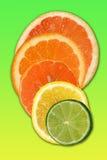 цитрусовые фрукты стоковое изображение