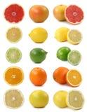 цитрусовые фрукты стоковое фото