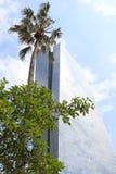 Цитрус и пальма в большом городе стоковые изображения
