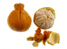 Цитрус Sumo или мандарин Dekopon стоковая фотография