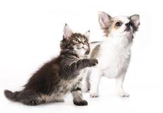 цифровой эскиз щенка котенка Стоковое фото RF