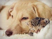 цифровой эскиз щенка котенка Стоковые Изображения