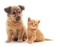 цифровой эскиз щенка котенка стоковая фотография rf