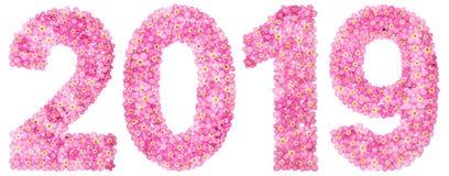 Цифр 2019 от розовых цветков незабудки, изолированных на белизне стоковые фото