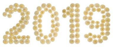 Цифр 2019 от cream цветков хризантемы, изолированных на wh Стоковые Фотографии RF
