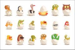Цыпленоки и гады насиживают от установленных яичек, нерождённых иллюстраций вектора животных иллюстрация вектора