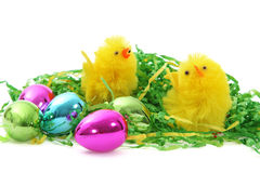 Цыпленоки и яичка пасхи Стоковые Изображения