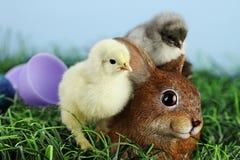 Цыпленоки и Bunnie пасхи стоковое изображение