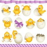 Цыпленоки пасхальных яя Стоковое Фото