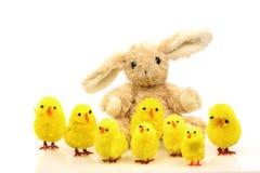 цыпленоки пасха зайчика Стоковая Фотография