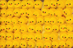 цыпленоки пасха золотистая Стоковое фото RF