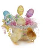 цыпленоки пасха корзины Стоковое Изображение