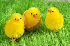 цыпленоки пасха Стоковое Изображение RF