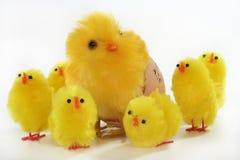 цыпленоки пасха Стоковые Фотографии RF