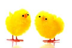 цыпленоки пасха Стоковое Изображение